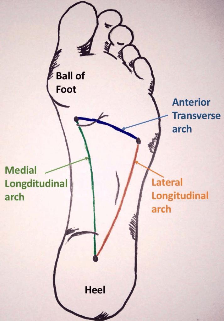 Foot arch diagram